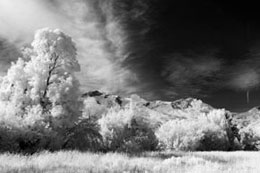 Black & White Infrared Filter (830nm) - No Adjustments