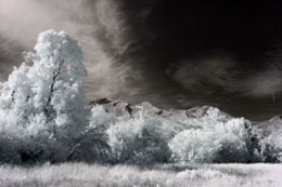 Standard Color IR Filter (720nm) - No Adjustments