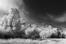 Extreme Color IR Filter (590nm) - B&W Image Conversion